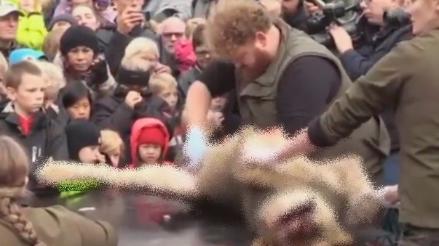 Zoológico practicó la disección del cadáver de un león frente a niños