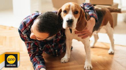¿Estás apto para tener una mascota?