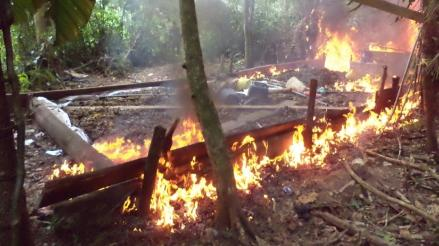 Destruyen laboratorio clandestino de PBC en Aucayacu