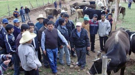 El Niño: 190 mil cabezas de ganado serán vacunadas para prevenir ántrax