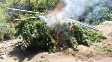 Sayán: efectivos policiales incineraron diez mil platones de marihuana