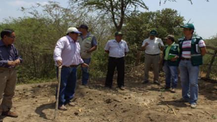 Sembrarán 10 mil plantones de algarrobo en Olmos