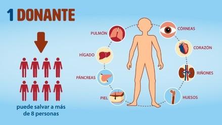 Infografía: Donación de órganos y tejidos