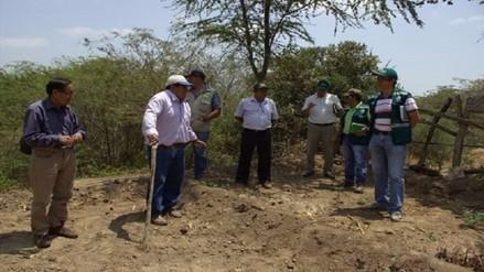 Lambayeque: buscan sembrar diez mil plantones de algarrobo