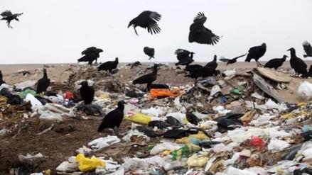 Indican que presencia de gallinazos continuará si basura no es erradicada