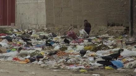 Solicitan caza sanitaria de gallinazos en Chiclayo