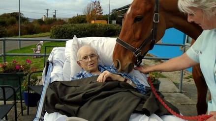 Un caballo fue llevado a un hospital para ver por última vez a su dueño
