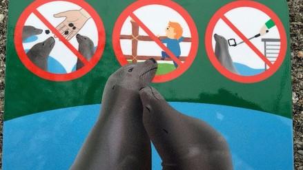¿Por qué el zoo de Viena prohíbe el paloselfi en los recintos de focas?