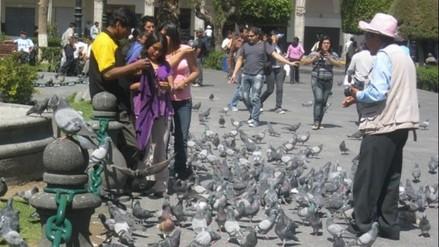 Autoridades deben hacer estudios de palomas para verificar si están infestadas