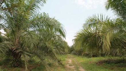 Palmicultores preocupados por la importación de biodiesel de soya