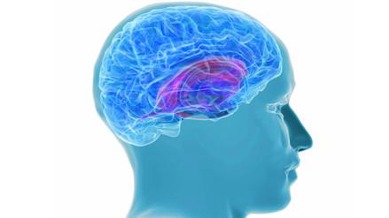 Un tratamiento contra el alzheimer podría empeorar la actividad del cerebro