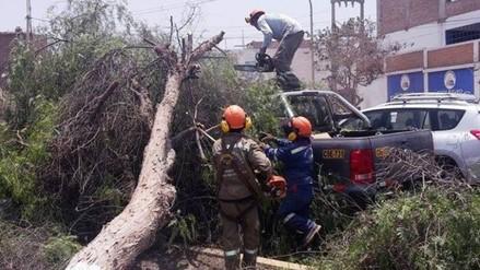 Árbol cae sobre camioneta en cruce de Costa Rica y América Sur