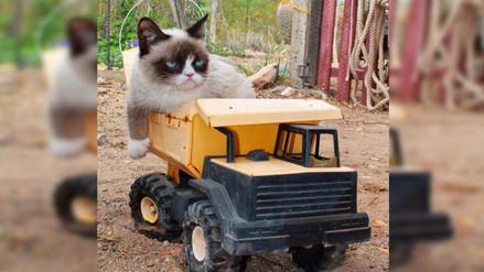 Entérate por qué los videos de gatos tienen tanto éxito en internet