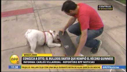 Otto, el bulldog que batió el Record Guinness tiene novia y se llama Lola