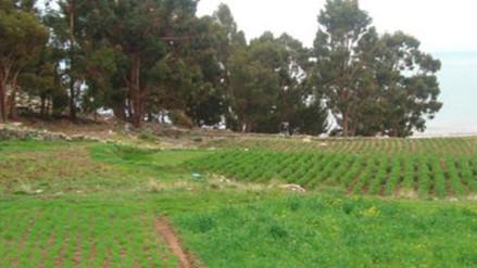 Erradicación de dos mil hectáreas de hoja de coca deja a familias sin trabajo