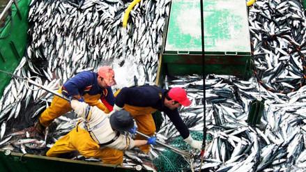 Pesca: Produce suspende por cinco días captura de anchoveta