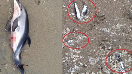 Delfín y peces son encontrados muertos en playa Villa Chorrillos