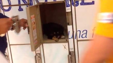 Facebook: cachorro fue encerrado en locker de supermercado