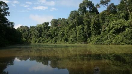 Fiscalía formaliza investigación por presuntos daños ambientales en el Manu