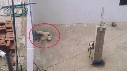 Trujillo: reportan maltrato a perros en techo de una vivienda
