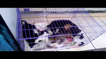 Callao: denuncian venta de animales en exteriores de veterinaria