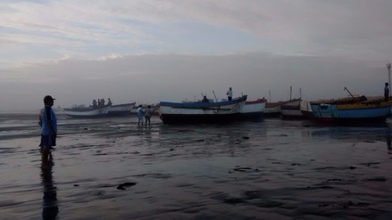 Pescadores piden control por masiva extracción ilegal de bonito y caballa
