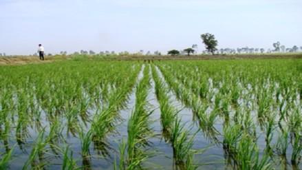 Chiclayo: agricultores preocupados por incremento del caudal del río Reque