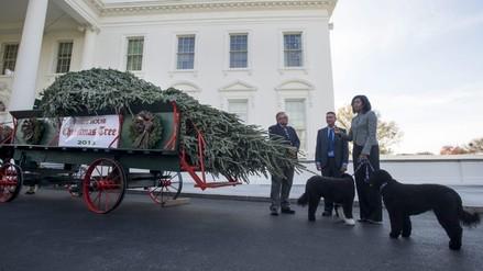La Casa Blanca ya tiene árbol de Navidad