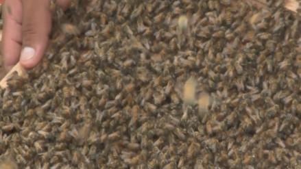 Tala ilegal sigue afectando actividad de apicultores de Lambayeque