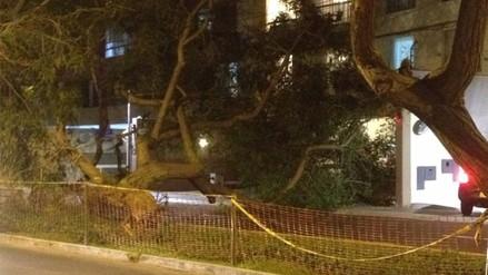 Magdalena: gran árbol cae en medio de la pista