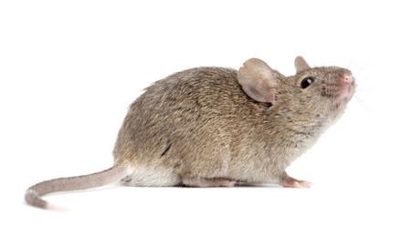 Tipo de azúcar ayuda a frenar expansión del cáncer de piel en ratones