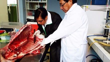 Huancayo: Bromatología incauta carne de alpaca con parásitos