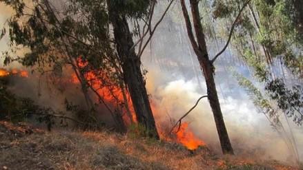 Incendio forestal afectó 10 hectáreas de bosques y pastizales