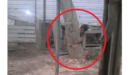 WhatsApp: hombre tala árboles en Talara