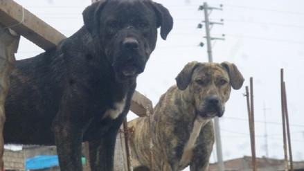 Canes callejeros que no sean adoptados serán sacrificados en Mariano Melgar