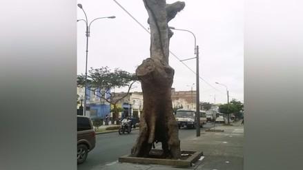 Centro de Lima: queman árbol y temen que caiga