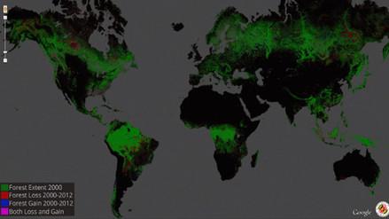 Google lanza un buscador para mapear zonas deforestadas