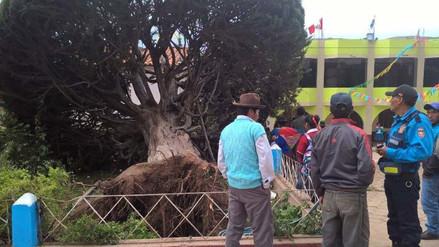 Andahuaylas: caída de árbol dejó un muerto y cinco heridos