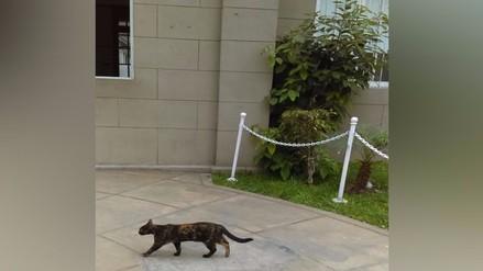 Reportan gatos en el hospital Arzobispo Loayza