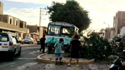 Trujillo: microbús de empresa California derriba árbol