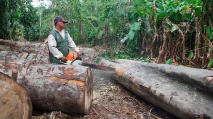 El transporte ilegal de madera debe ser denunciado