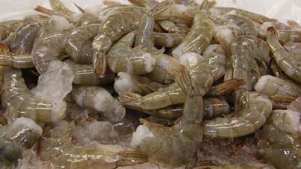 No se podrá pescar ni comercializar langostinos frescos hasta el 15 de febrero