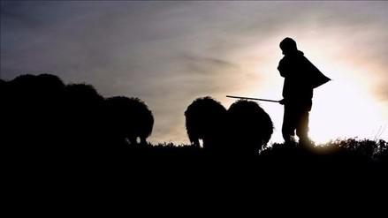 Peruanos ovejeros en Utah logran mejores condiciones de vida y salario