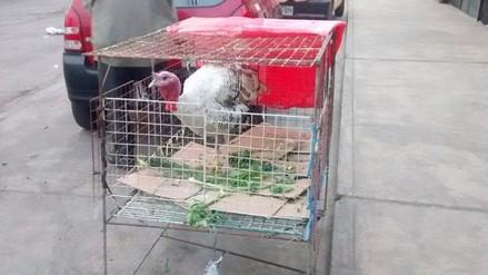 El kilo de pavo se vende a 14 soles en mercados de Arequipa