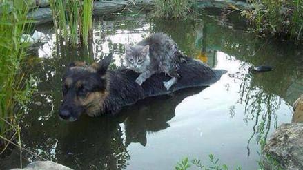 Facebook: imagen de un perro que salva a un gato en una inundación es viral