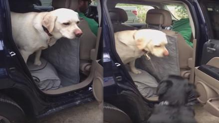 YouTube: perro recibe ayuda de su compañero para bajar de un vehículo