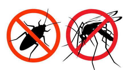 Insectos del verano se ahuyentan con repelentes naturales