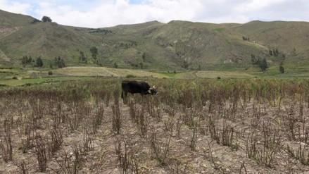 Entre el 30% y 40% de cultivos perdidos por falta de lluvias por