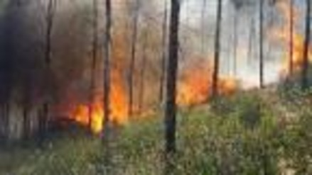 Independencia: incendio forestal arrasó con cuatro hectáreas de terreno
