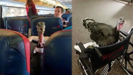 Twitter: pasajero viaja en un avión acompañado de su pavo